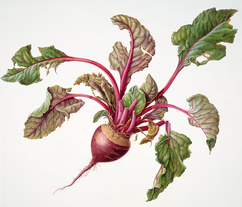 how to prepare beetroot for pickling