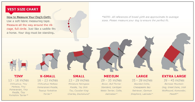 Infographic for Dog Vests
